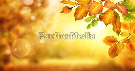 gule blade dekorere en sloret glodende