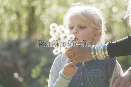 blond little girl blowing seeds of