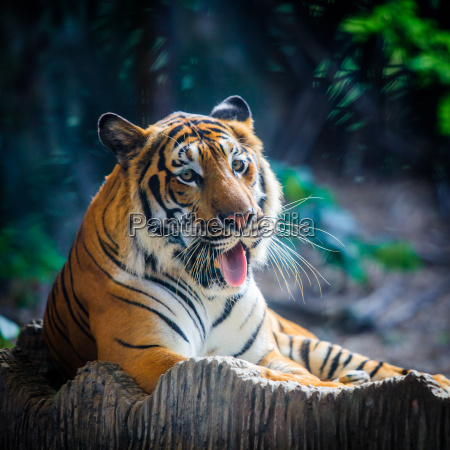 fare trae dyr pattedyr asien ansigt