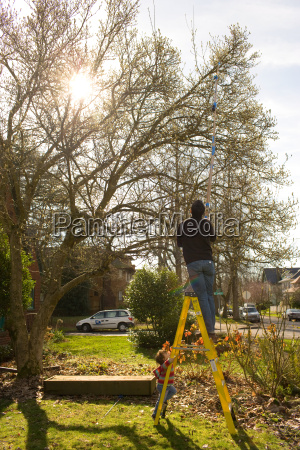 man pruning trees in garden on