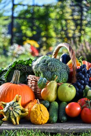 udvalg af friske okologiske grontsager og