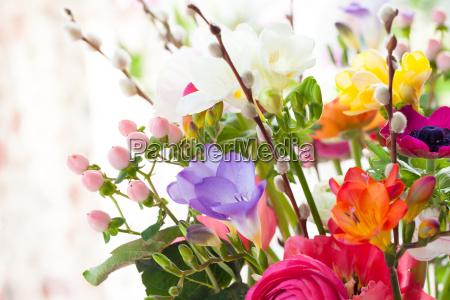 farverige forar blomster