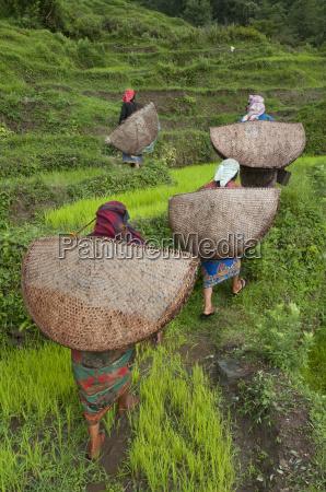 kvinde kvinder landbrugsmaessig kulturel kvindelig asien