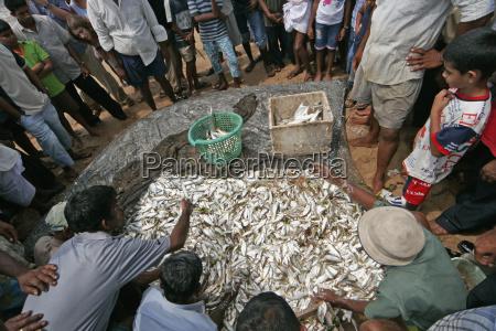 folk crowd omkring auktion af fisk