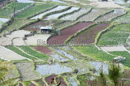 blandet rismarker dyrke grontsager under hojeffektive