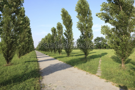 path parco nord milan lombardy italy