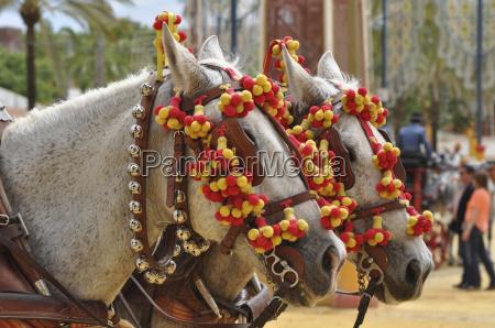 kultur farve hest messe udstilling turisme