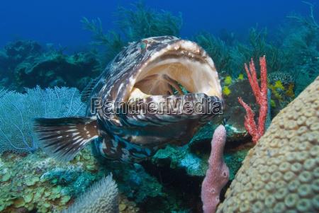 tur rejse farve dyr fisk horisontal