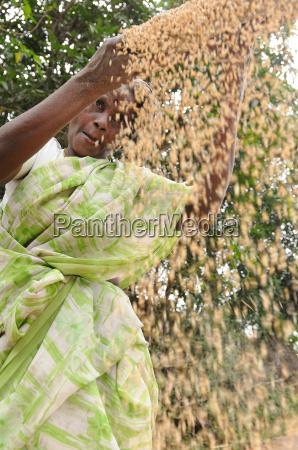 sigtning korn i indiens landomrader trissur