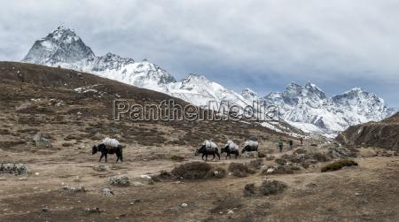 nepal himalaya khumbu pak dyr pa