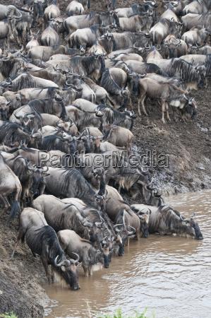 afrika kenya maasai mara national park