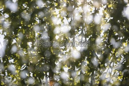 blad trae blade lovtrae gren kvist