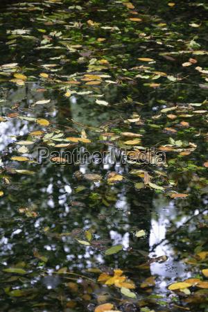 blad blade refleksion efterarsagtig efterars bayern