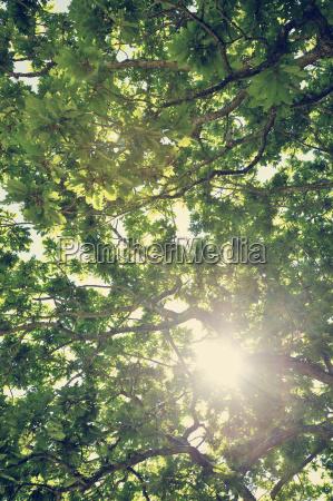 sverige moelle solen skinner gennem kronen