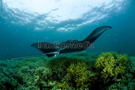 bevaegelse positionsaendring forskydning dyr fisk undersoisk