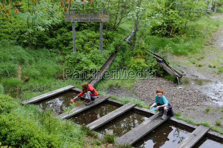 tyskland bayern bavarian forest national park