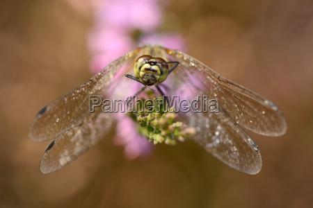 flydende dyr insekt blomstre blomstrende blomsterpragt
