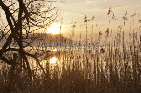 germany view of willow tree in