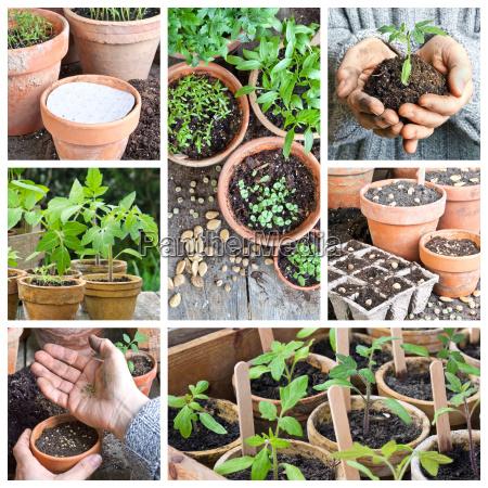 have trae jorden jordbund jord muld