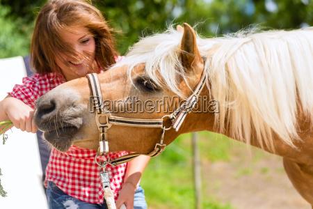 woman feeding horse on pony farm