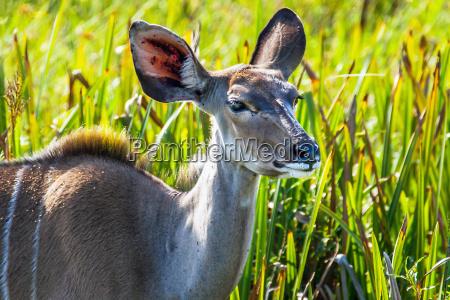 fare rejse ferie pattedyr fauna nationalpark