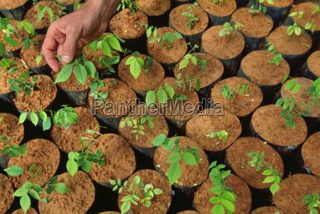 tree seedlings in nursery montes clares
