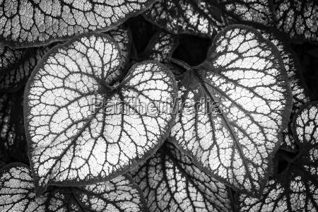 blad blade hjerteformet glem mig ikke