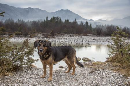 mongrel dog in nature landscape
