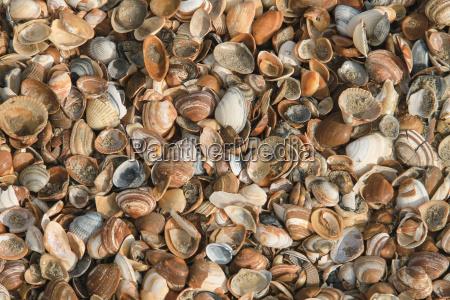 ferias colorido praia beira mar da