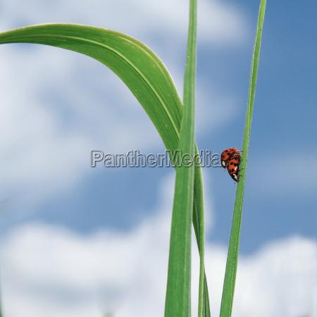 bla blad sommer sommerlig bille mate