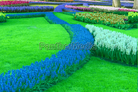 flower garden with multi coloured tulips