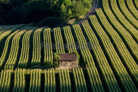 agriculture corn field lot quercy france