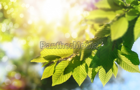 green leaves on a branch with