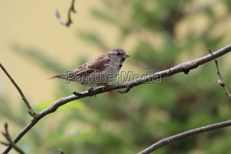 a sparrow sits on a branch