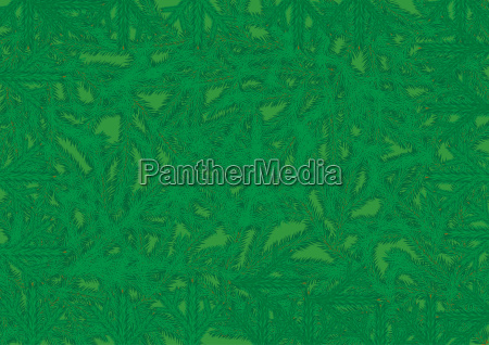 background of coniferous tree branches