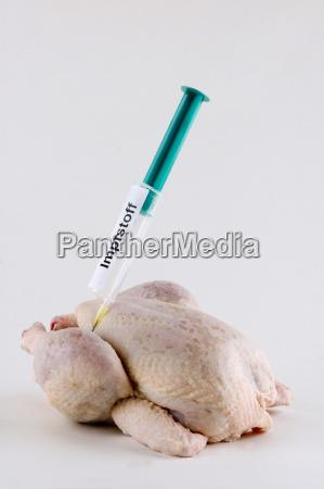 kylling fugl fugl influenzapandemi syg sygdom