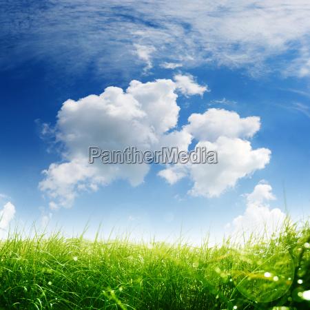 forars eng med himmel og skyer