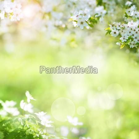 forar landskab med kirsebaerblomster