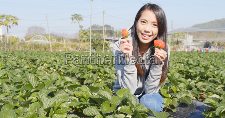 kvinde plukke mad levnedsmiddel naeringsmiddel fodevare