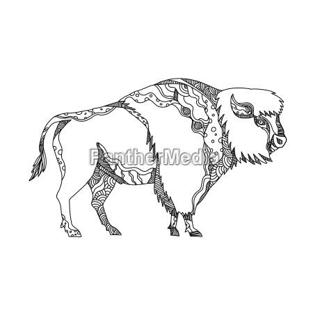 american buffalo doodle art