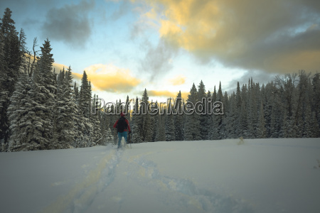 rear view of hiker skiing on