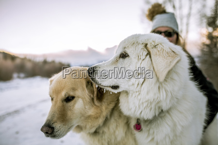 close up of dogs with woman