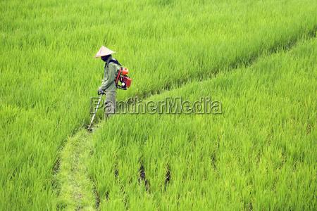 mandlig maskulin viril landbrug agerbrug mark