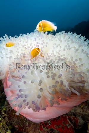 makrooptagelse naerbillede dyr fisk undersoisk wildlife