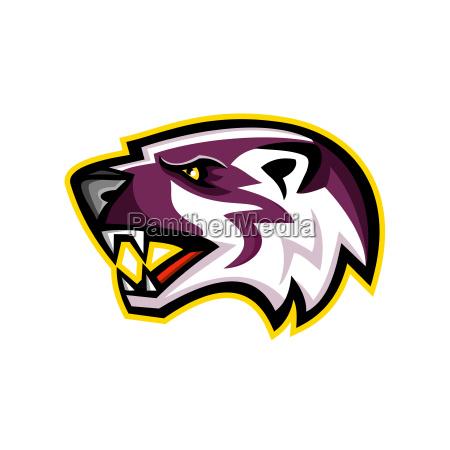 american badger mascot