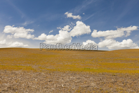 scenery of brown field under blue