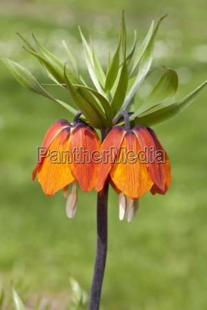 appelsin closeup close up blomst plante