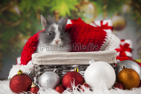 animal rabbit bunny on christmas background