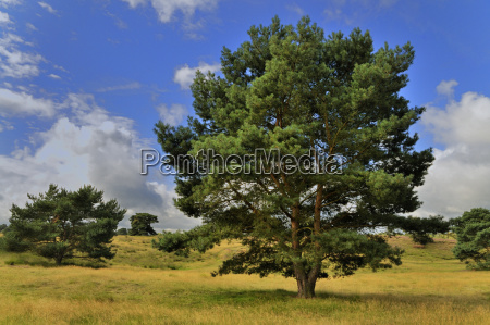 bucolic pine deserted day during the