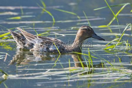 dyr fugl fauna ostrig sevaerdigheder fugle
